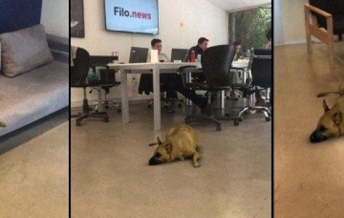 Filtro Perro (Filo News)